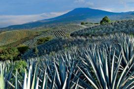 Tequila jalisco y Paisaje agavero, patrimonio de la humanidad en México