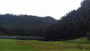 El Bosque de los Hongos Azules